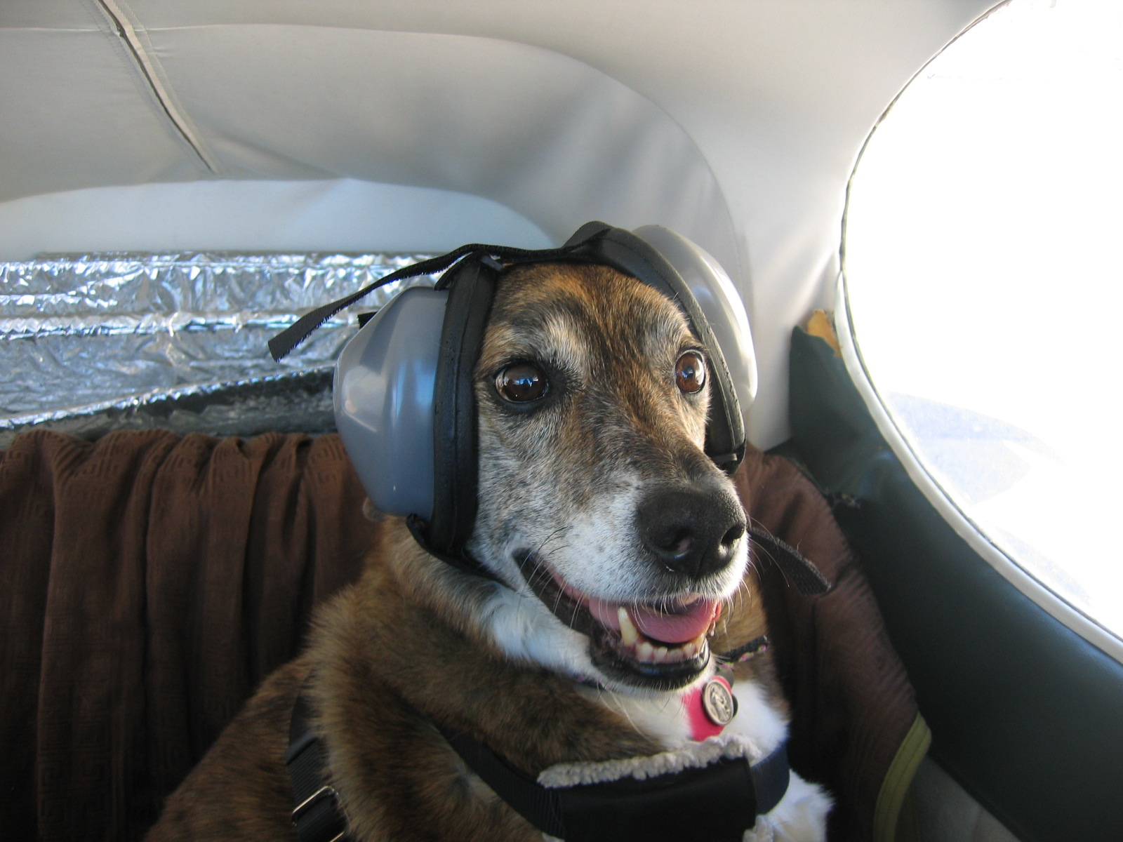 Dog Ear Sound Protection